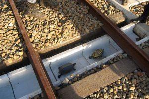 tuneles japon tortugas