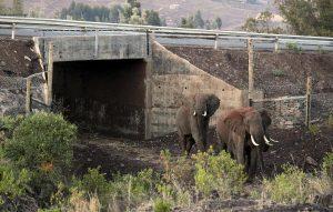 tunel elefantes kenia