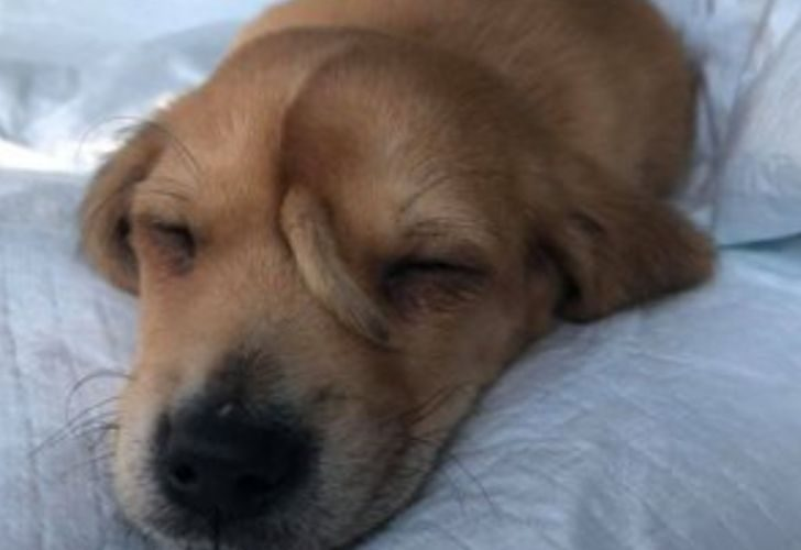 perro abandonado con cola viral