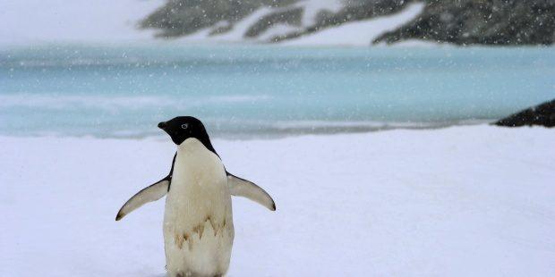 pinguino emperador en peligro de extincion