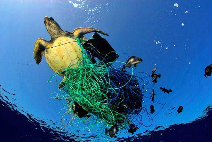 contaminacion en el agua plasticos